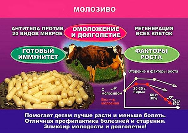 Польза и вред коровьего молозива для человека