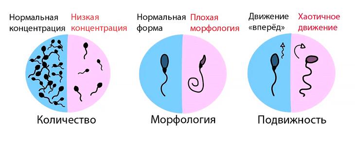 Что такое фертильность у мужчин простыми словами: расшифровка тестов и анализов
