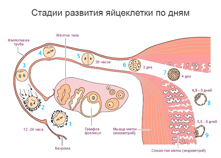 Какие бывают первые ощущения и симптомы беременности на 1 неделе развития плода