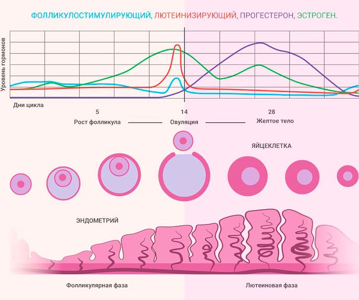 Выделения в первый месяц беременности, как признак и симптом зачатия