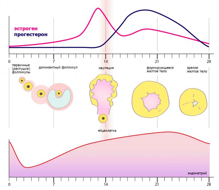 Возможны ли месячные в первый месяц беременности и по каким признакам они отличаются