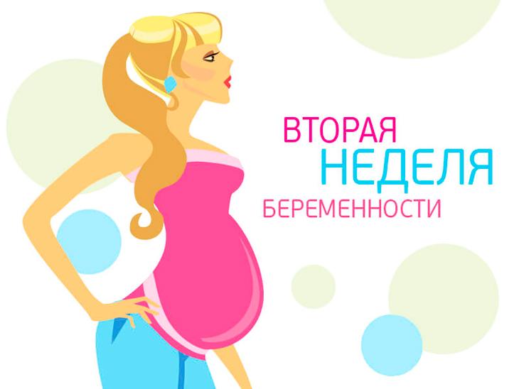 Симптомы и ощущения на первых двух неделях беременности ранних сроков